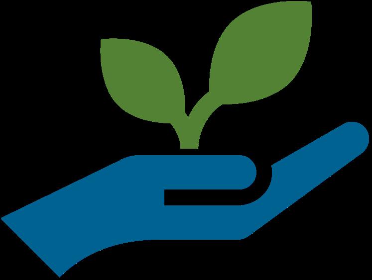 Eine junge Pflanze in einer Hand